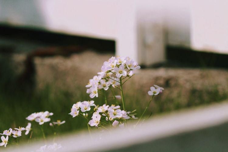 <3 Flowering