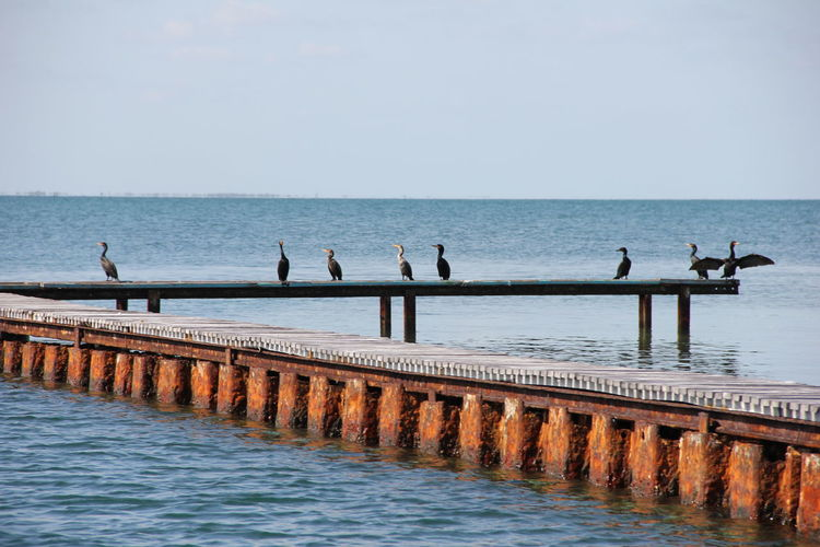 Cormorants Perching On Pier At Sea Against Sky