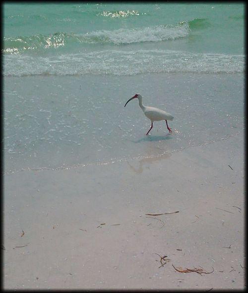 Life Is A Beach Ocean Life Waves Pastel Power Oceanside Landscapes With WhiteWall Ocean Beach Photography Beach Ocean Bird