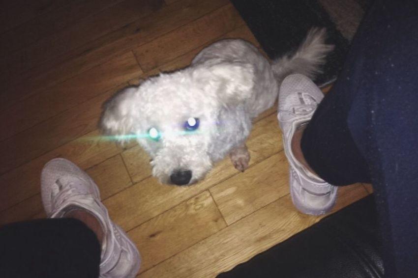 Lazer eyes dog 🐩 Superdog Hanging Out