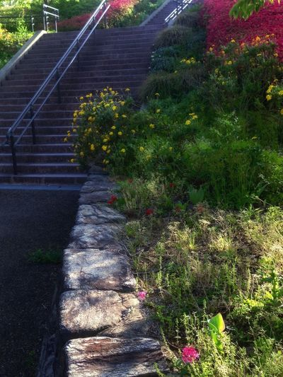 Walking Around Taking Pictures In The Park Earlyspring Evening Steps And Staircases Steps Staircase No People Day Outdoors Nature Plant Saikai City Japan