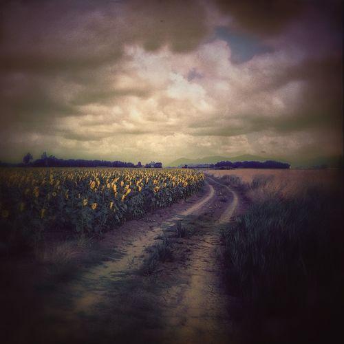 IPhoneography EyeEm Best Shots - Landscape AMPt_community NEM Submissions