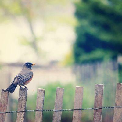 Fort Tryon Bird Instagramuptown Inwood Washingtonheights Uptown newyork city newyorkcity parks forttryonpark nature birds