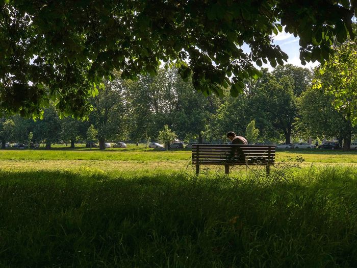 Freedom to be Plant Green Color Grass Growth #FREIHEITBERLIN Tranquil Scene Outdoors Tranquility Bench