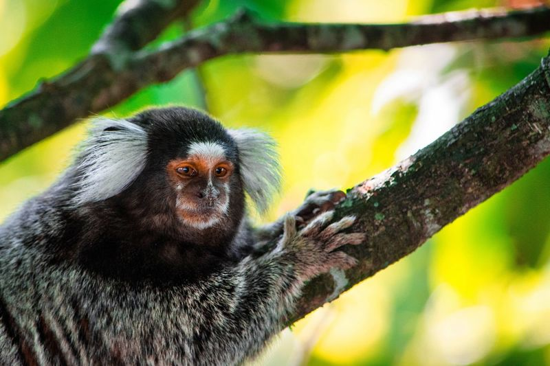 Close-up of monkey looking away while sitting on tree in forest