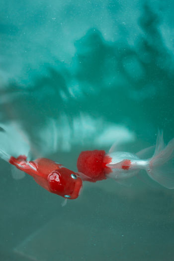 High Angle View Fish Swimming In Water