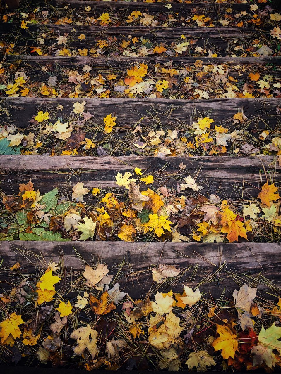 leaf, plant part, plant, yellow, autumn, beauty in nature, nature, day, no people, flower, change, vulnerability, flowering plant, fragility, high angle view, falling, full frame, leaves, outdoors, freshness, maple leaf, autumn collection, messy, natural condition