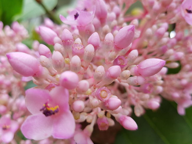 Close up wildflower. Flower Head Flower Pink Color Petal Blossom Close-up Plant In Bloom Blooming