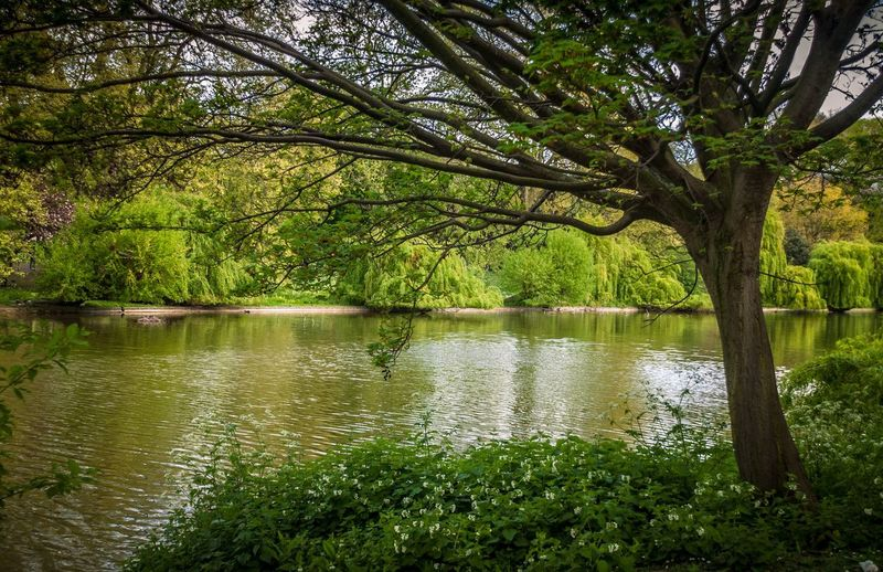 Water in St. James Park. Tree Nature Lake Water Green Color Outdoors Beauty In Nature Reflection Scenics Tree Trunk Tranquility Forest Landscape No People Growth Travel Destinations Day Branch Grass Sky EyeEm Nature Lover EyeEm Best Shots - Nature