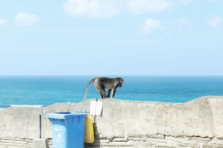 A monkey observing the sea and things down there Sea Beach Cliff Sunny Monkey Beach Life Beachlife Summer Vibes EyeEm Best Shots - Nature Eye4photography  EyeEm Gallery EyeEm Nature Lover Phography Beach View Animal EyeEm Selects Sunny Day Sea Water Animal Animal Themes Mammal Sky Horizon One Animal Nature Outdoors Focus On The Story