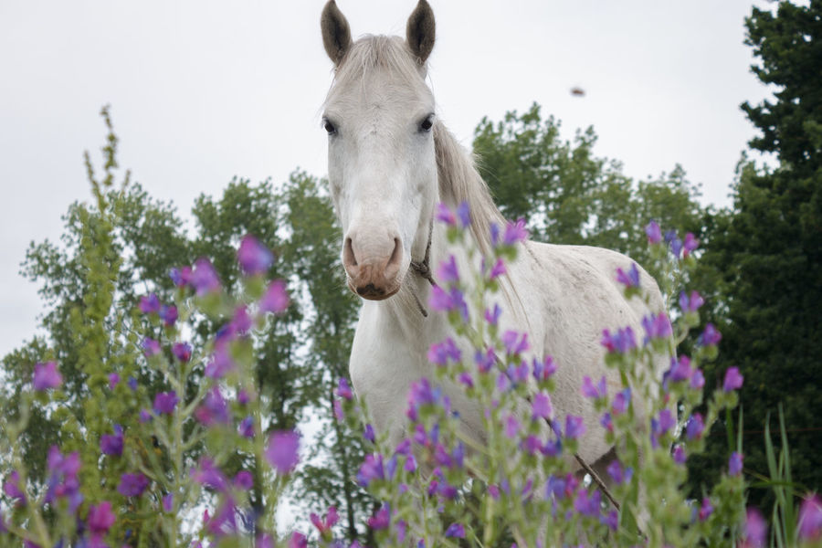 Animal Themes Beauty In Nature Close-up Day Domestic Animals Flower Freshness Growth Horse Livestock Low Angle View Mammal Nature No People One Animal Outdoors Plant Purple Sky Tree