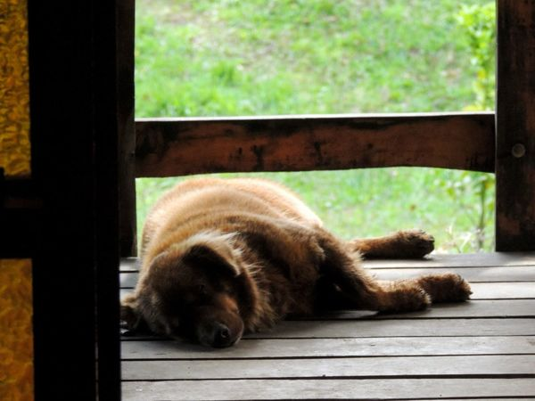 Nikon Coolpix P510 Sleeping Dog Dog Lying Down Relaxation Sleeping Close-up