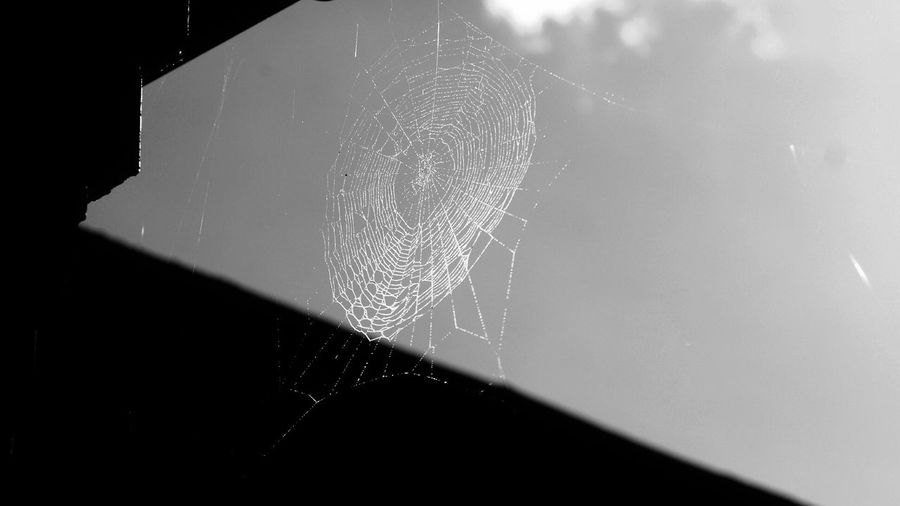 Close-up Selective Focus No People Spiderweb Black And White Outdoors Beauty In Nature Low Angle View