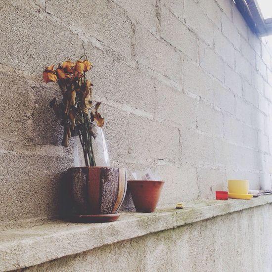 Flowers Dead Flowers Art Deco Or Not Flowers