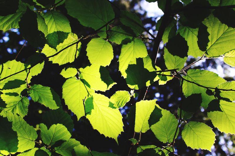 Shelter. Leaf