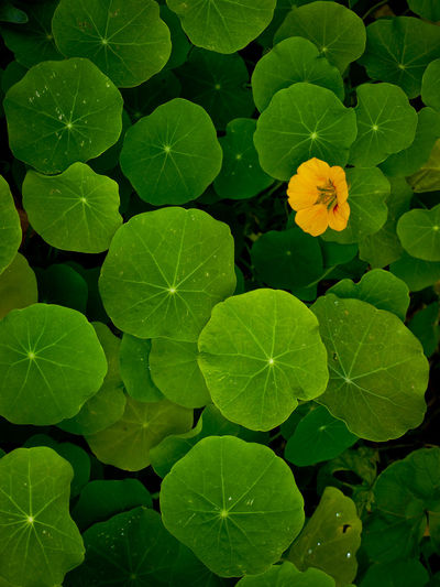 Beauty In Nature Botany Flower Green Growth In Bloom Leaf Leaves Nature Nature No People Outdoors Plant Springtime Vibrant Color