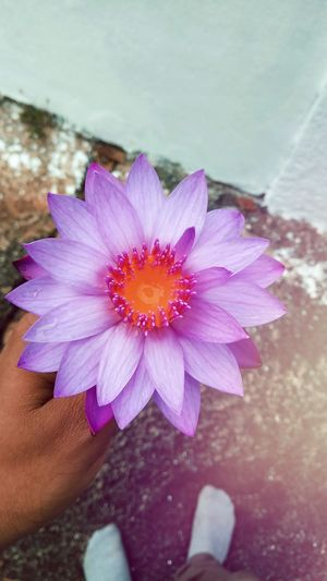 Flower 🌸 EyeEmNewHere DivinePeacePhotography Divine Temple Templephotography Hand Wishes Pink Flower Pink Pink Color Light And Shadow Light