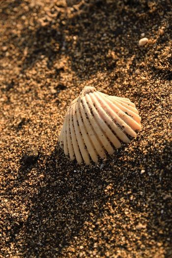 summertime Animal Animal Shell Animal Wildlife Animals In The Wild Beauty In Nature Close-up Land Natural Pattern No People One Animal Sand Sea Seashell Shell Sunlight