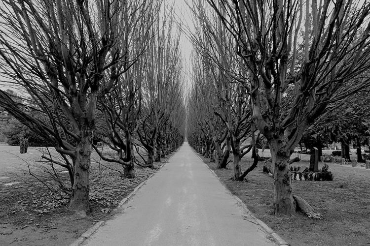 Simply awesome..... Bare Tree Diminishing Perspective Nature Beauty In Nature Leading Lines Nikonphotographer Nikonphotography Nikon Blackandwhite Photography Blackandwhite Wide Angle Tokina 11-16 Mm F/2,8 Copenhagen, Denmark