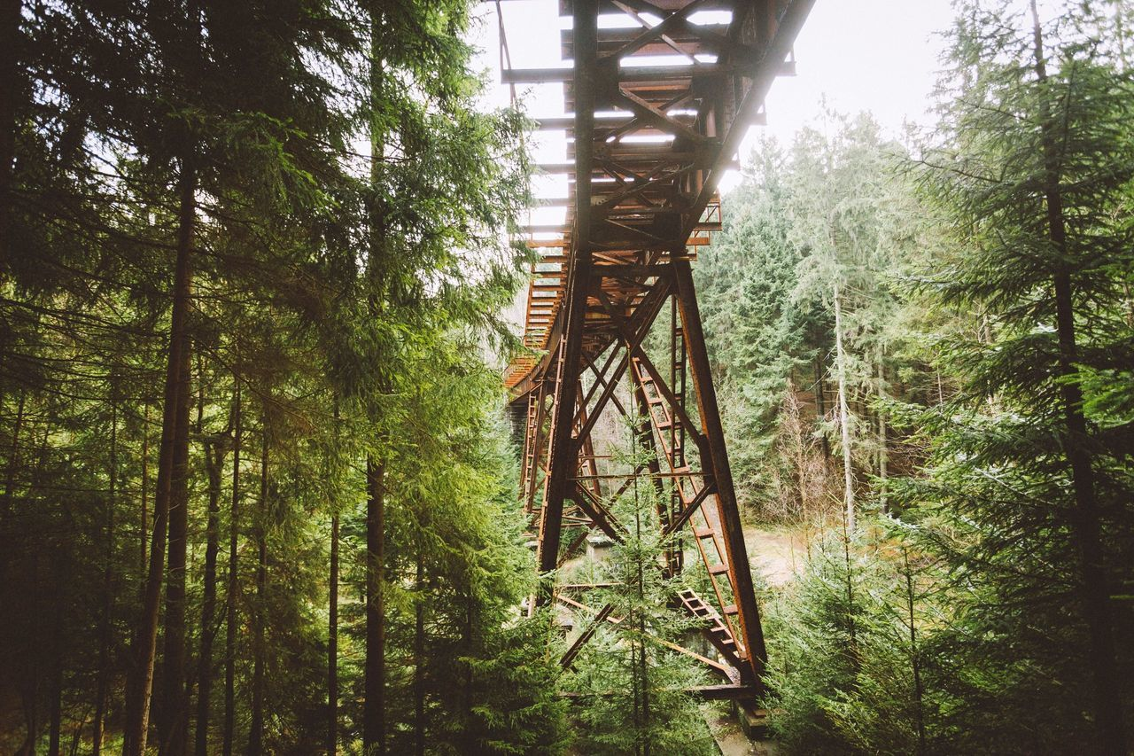 Low angle view of railway bridge amidst trees at erzgebirge