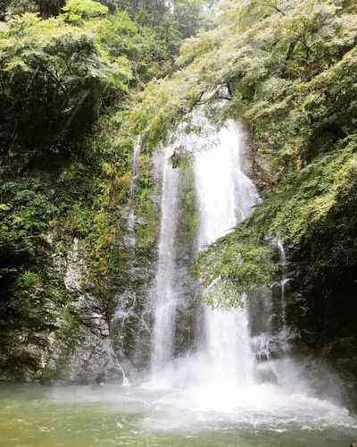 Love it. Forestbathing Waterfall Beauty In Nature Nature Forest Green Color Power In Nature Japan