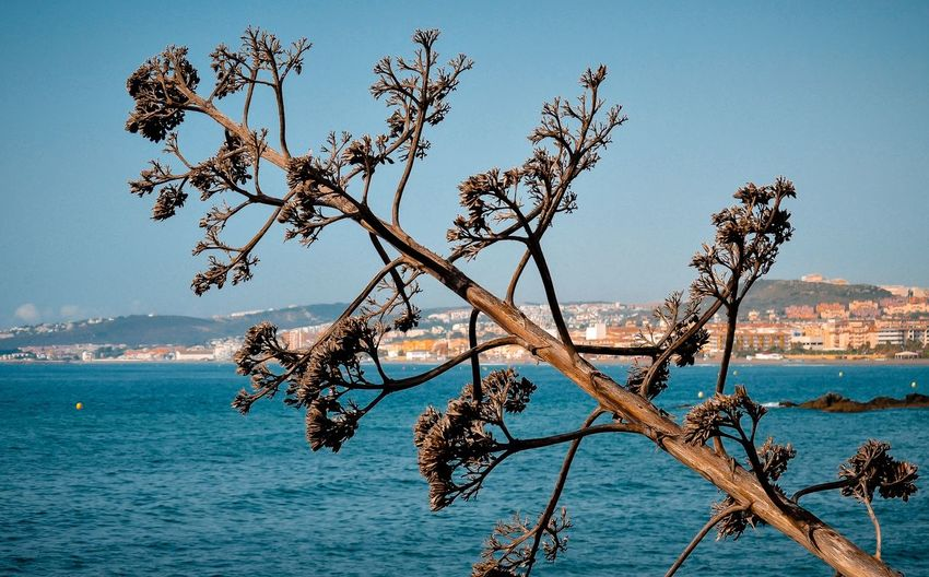 Hugging A Tree From My Point Of View Eye4photography  Nature_collection EyeEm Nature Lover Landscape Taking Photos Beach