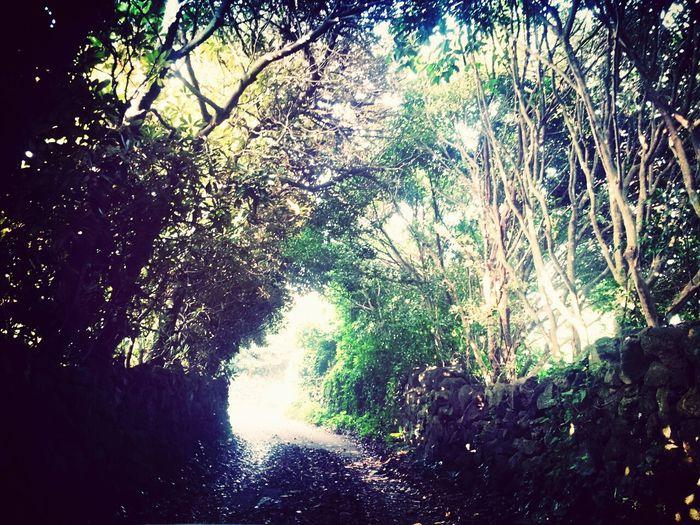 우연히 발견한 나만의 작은 나무터널공간