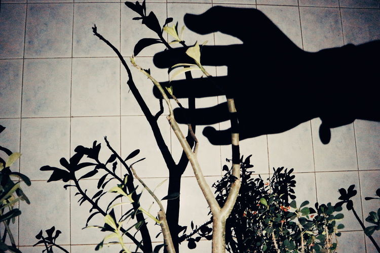 Touch and Feel Mix Yourself A Good Time Plant Outdoors Leaf Tree Close-up Nature Fine Art Photography The Week On EyeEm EyeEmNewHere Photography Themes Shadows & Lights Lowlightphotography Arts Culture And Entertainment HUAWEI Photo Award: After Dark