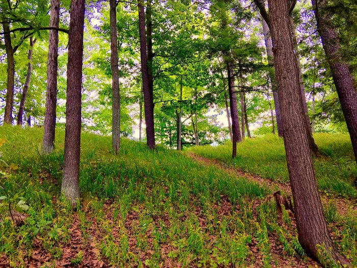 Forest Tree Nature WoodLand Green Color Outdoors Green Color Vibrant Color No People Forests Forestwalk Trees