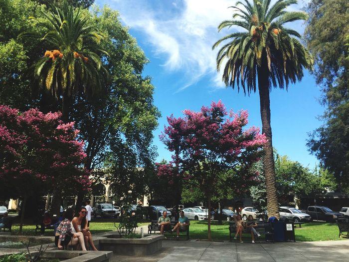 Sunday in the park California Love
