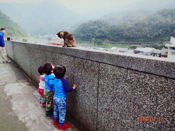 Taiwan Houtong Cat Children