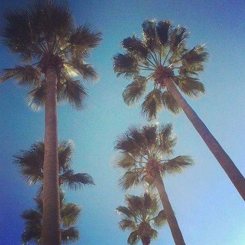 Fun #Sunday CA Sunday California Cali Palmtree Bestcoast Ilovecalifornia Ca_skies Californiagirl Californiastyle