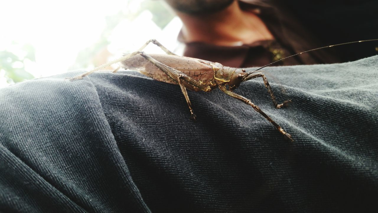 one animal, real people, one person, animals in the wild, human body part, human hand, close-up, insect, animal wildlife, day, men, indoors, grasshopper, people