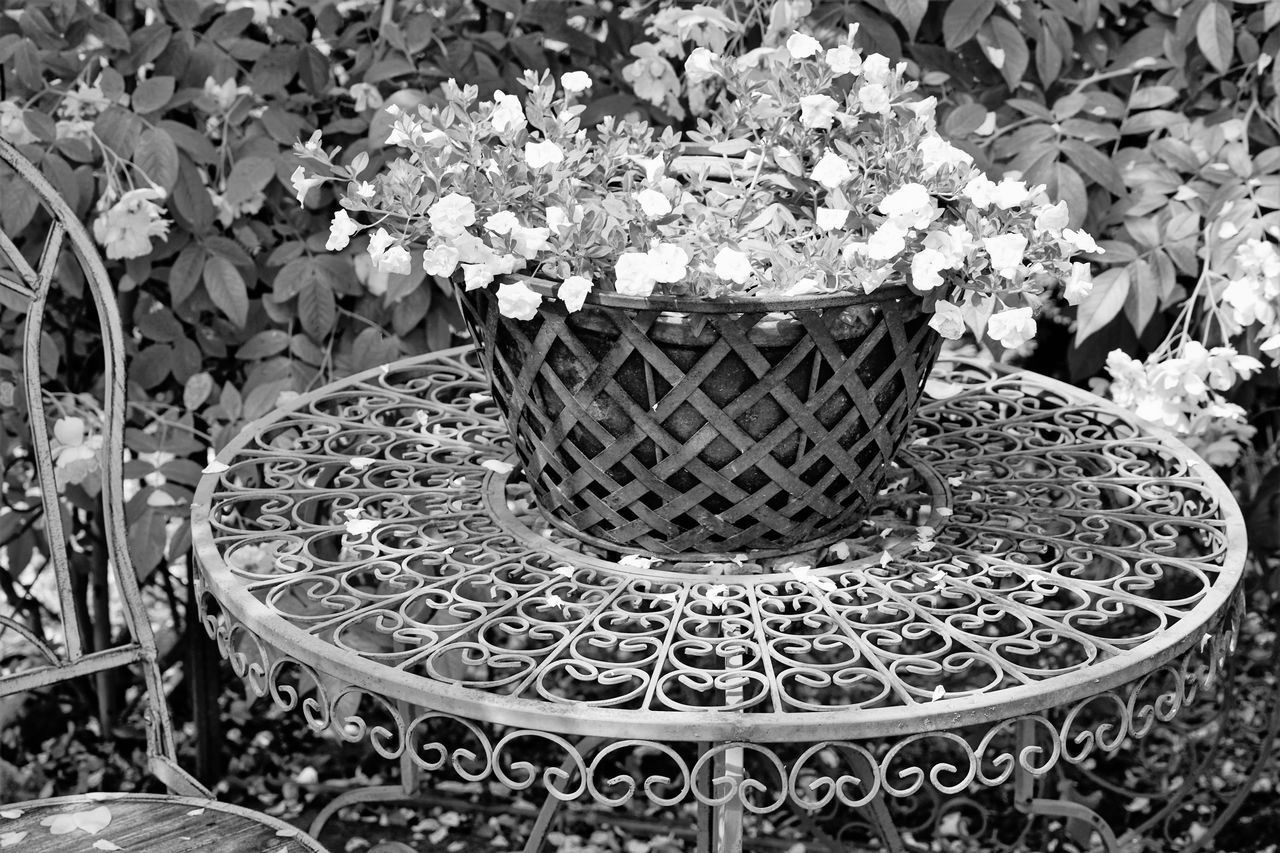 CLOSE-UP OF POTTED PLANTS ON METAL TABLE IN POT