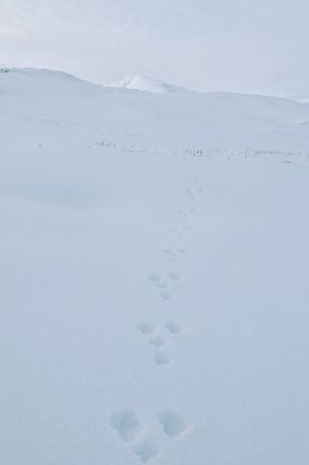 Mountain hate tracks in snow. Scottish highlands. Animal Tracks Mountain Hare Snow Glencoe Mountain Resort Scotland Background Outdoors Wintertime White White Background Mountains Winter Glencoe Cold Landscape Scottish Highlands No People Scenery Cold Temperature Mountains And Sky Mountain Scenics Outdoor Photography Hills Hill