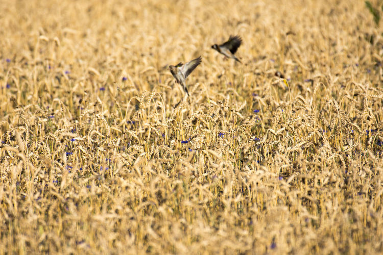 Animals In The Wild Nature Nature Photography Vogel Animal Photography Animal Wildlife Bird Distelfink