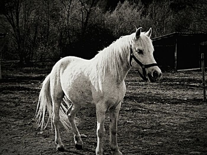 horse First Eyeem Photo