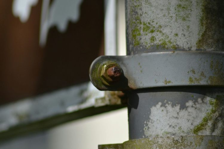 Photograph of a Nut on a Roadsign Pole. Moss Rust