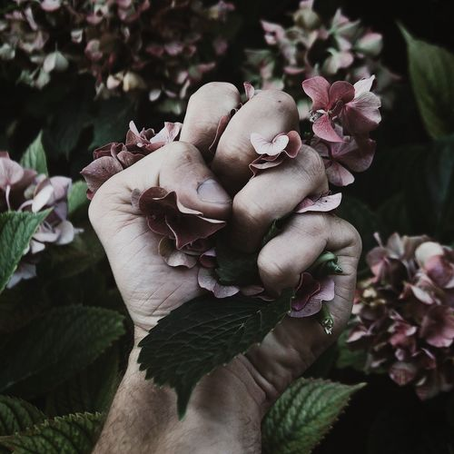 Cropped hand of man crushing hydrangeas