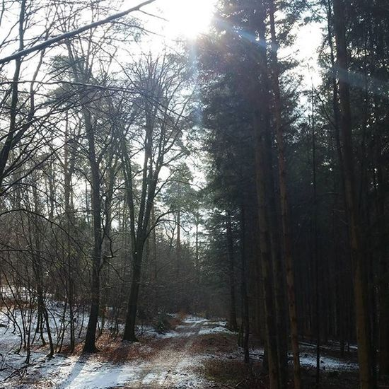 Outdoors Palatinateforest Pfälzerwald Germany Nature Forest Hiking Trees Beautiful Beautifulday Beautifulview Sunlight Snow Winterisalmostover Nofilter Path