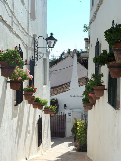 Potted plants on street amidst buildings