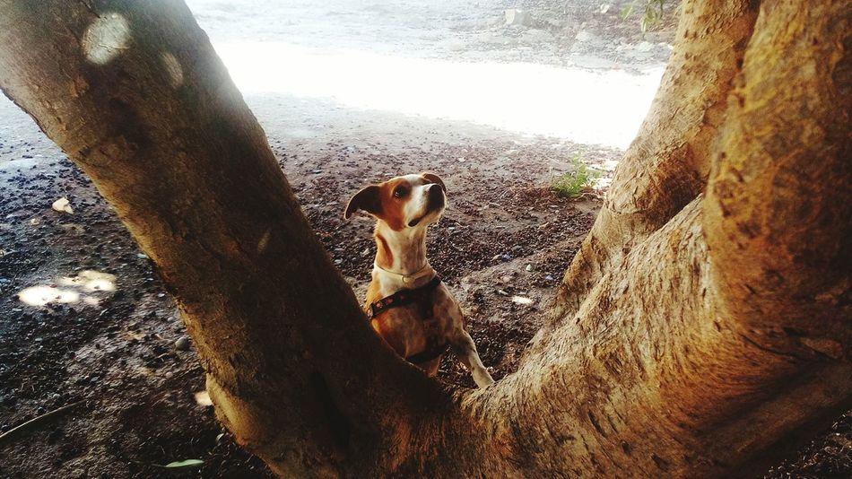Dog Dogs Dog Love Dogs Of EyeEm Tree Arbol. Buscando SearchingDogstagram