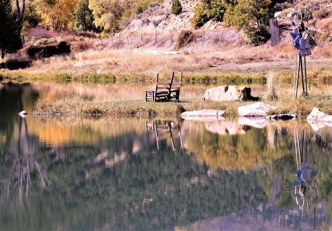 Reflection Water Lake Plant Nature Tree Beauty In Nature Day Animals In The Wild Group Of Animals No People Scenics - Nature Animal Themes Animal Tranquility Waterfront Animal Wildlife Vertebrate Tranquil Scene Outdoors