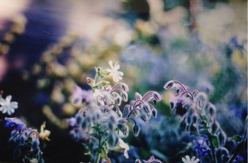 Dawn II Traveling Filmcamera Film Photography 35mm Film Film Filmisnotdead Suffolk Floral Flowerporn Golden Hour