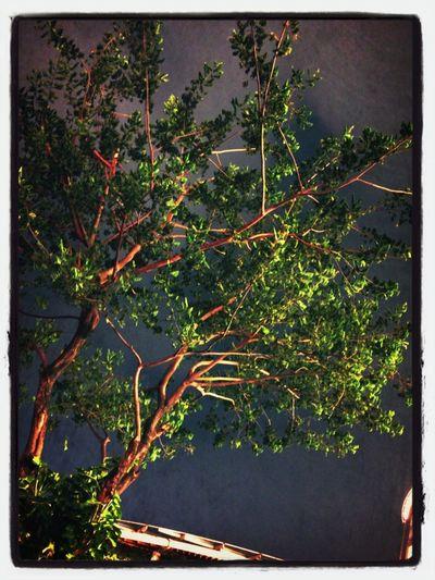 Tree Long Exposure Jalan-jalan