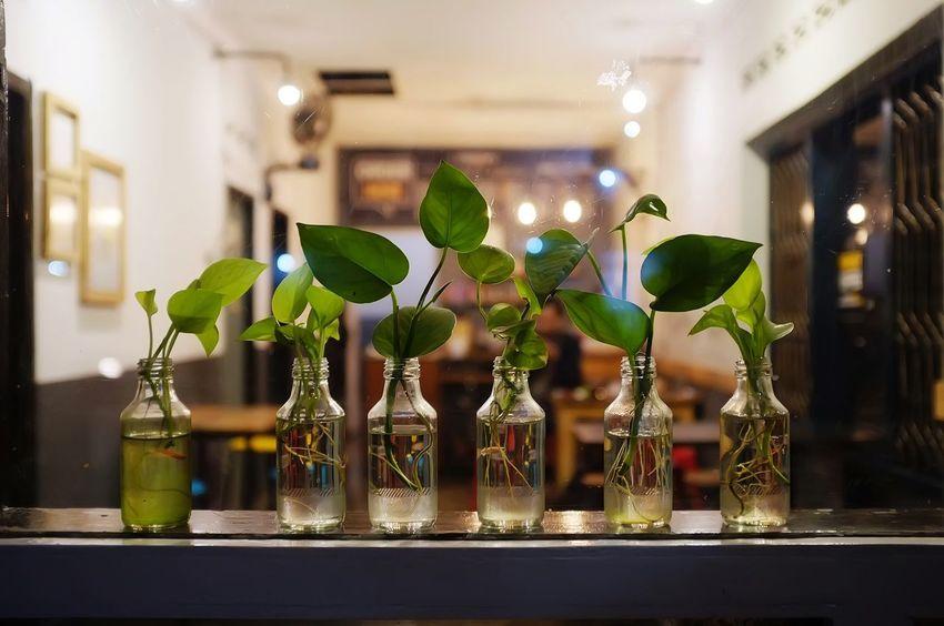 DIY Vase Bottle Close-up Decoration Focus On Foreground Fragility Freshness Green Color Growth Illuminated Indoors  Leaf Nature Night No People Plant Shelf Vine