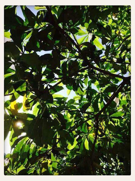 Relaxing Natural Tree Tree Porn ヾ( ̄▽ ̄)