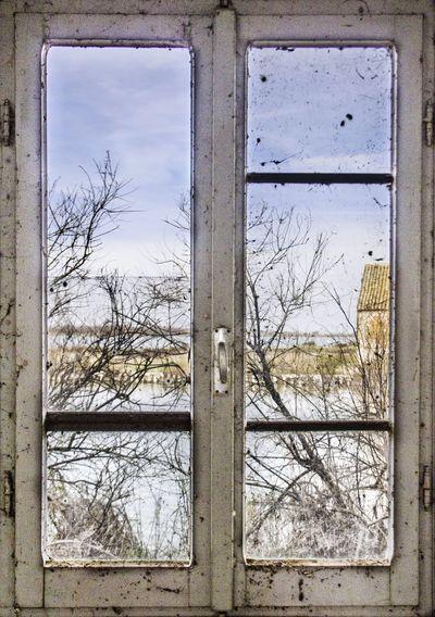 Bare trees seen through abandoned window