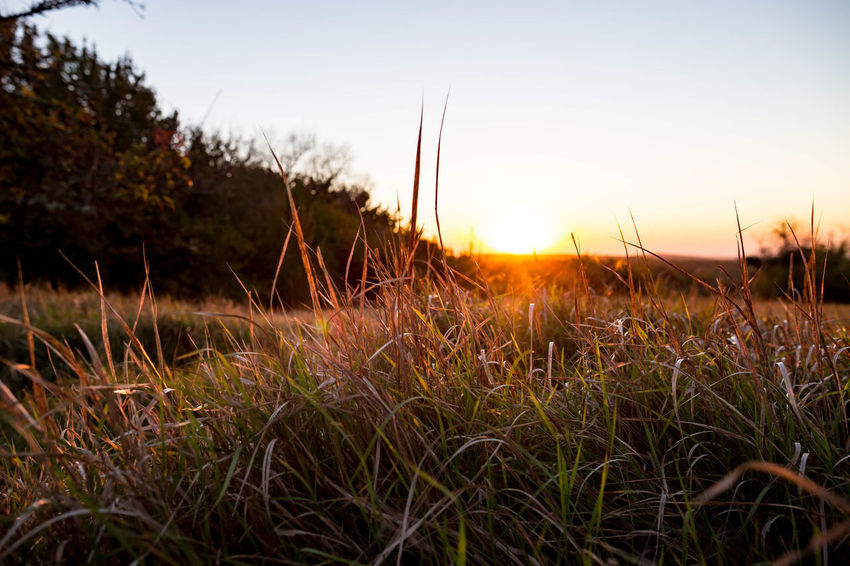 Sky Sunset Plant Grass Growth Tranquility Beauty In Nature Tranquil Scene Nature Field Land Sun No People Sunlight Scenics - Nature Environment Landscape Non-urban Scene Focus On Foreground Outdoors Lens Flare Timothy Grass Stalk Blade Of Grass