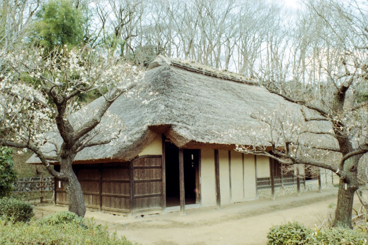 Film Photography No People Outdoors 古民家 Japanese House Grass Day Tree Green Color Filtered Image Japanese Culture Old Old House Photoshop Machida Yakushiike 薬師池公園